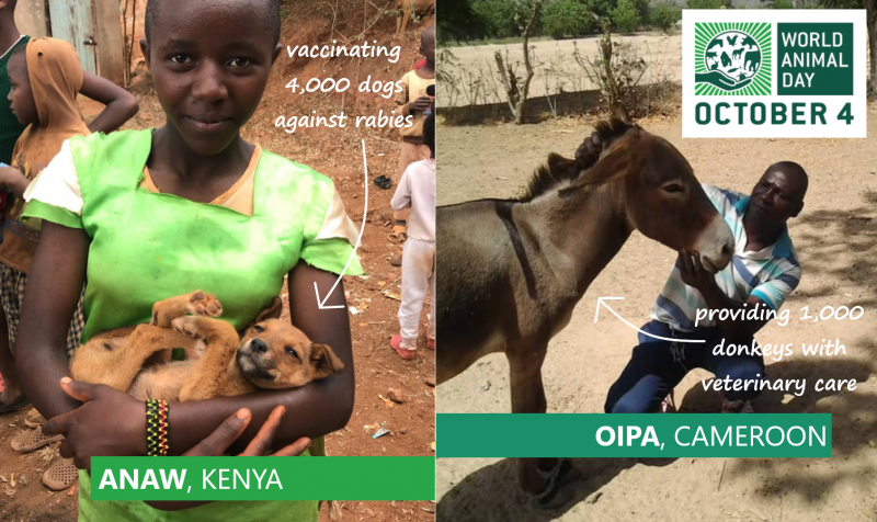 ANAW girl with puppy, OIPA man with donkey